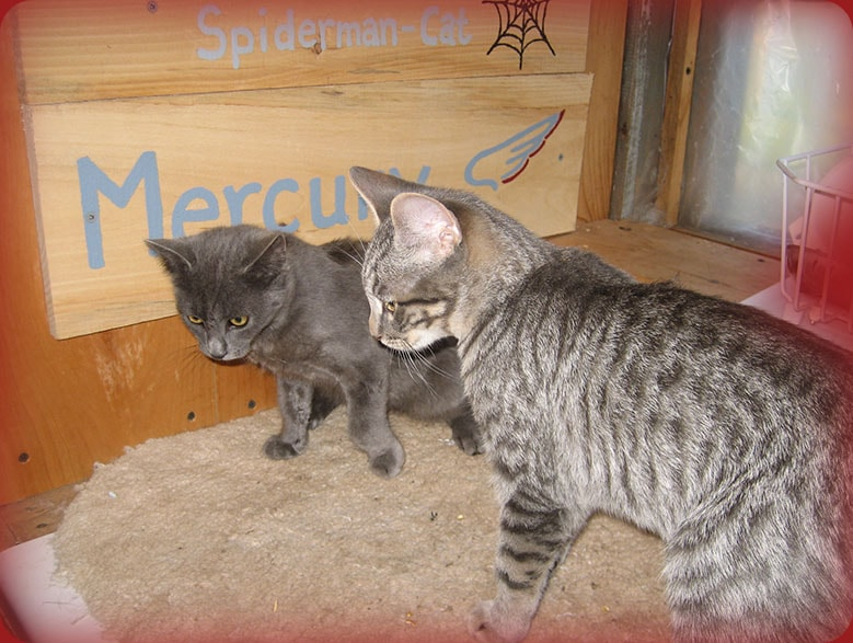 mercury-smokey-the-bear-cat-min.jpg